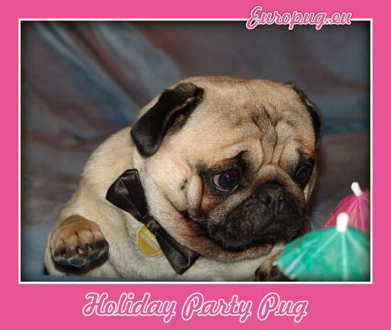 Holiday pug