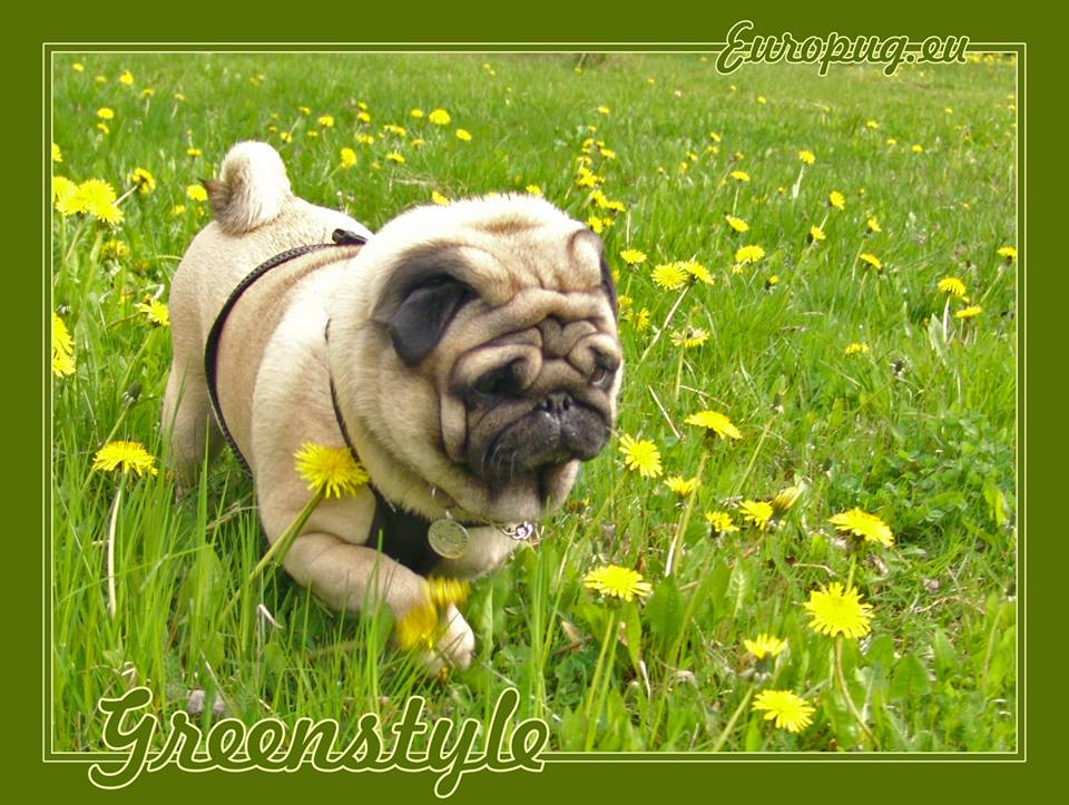 Summer Pug Valli Gifts For Pug Lovers