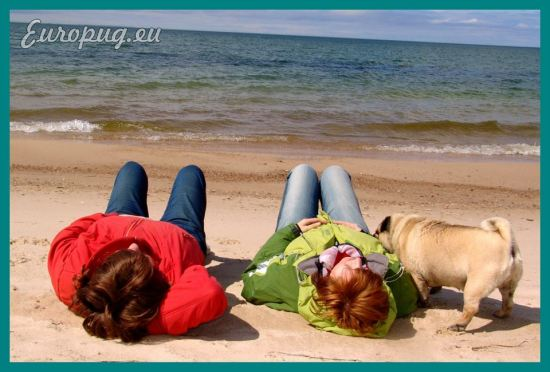 pug-outdoor-picnic-02