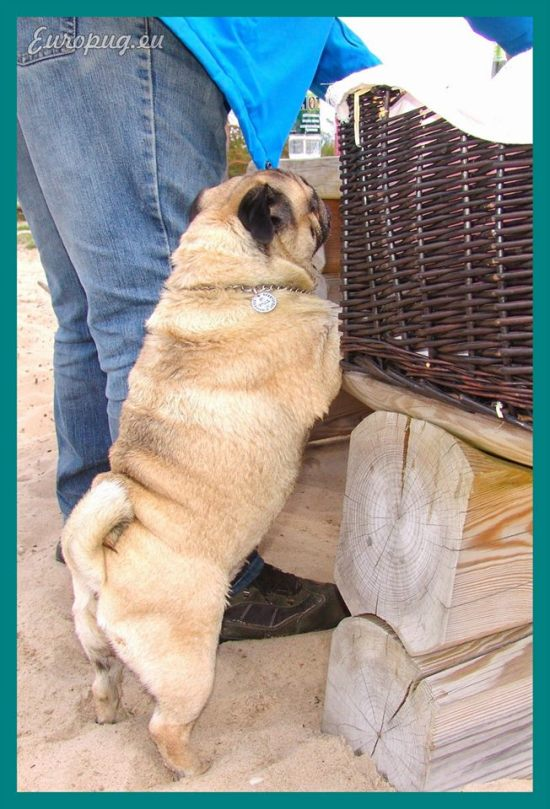 pug-outdoor-picnic-06