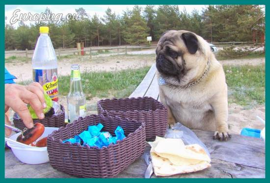 pug-outdoor-picnic-09