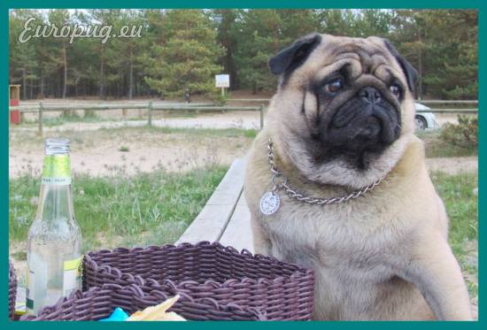 pug-outdoor-picnic-10