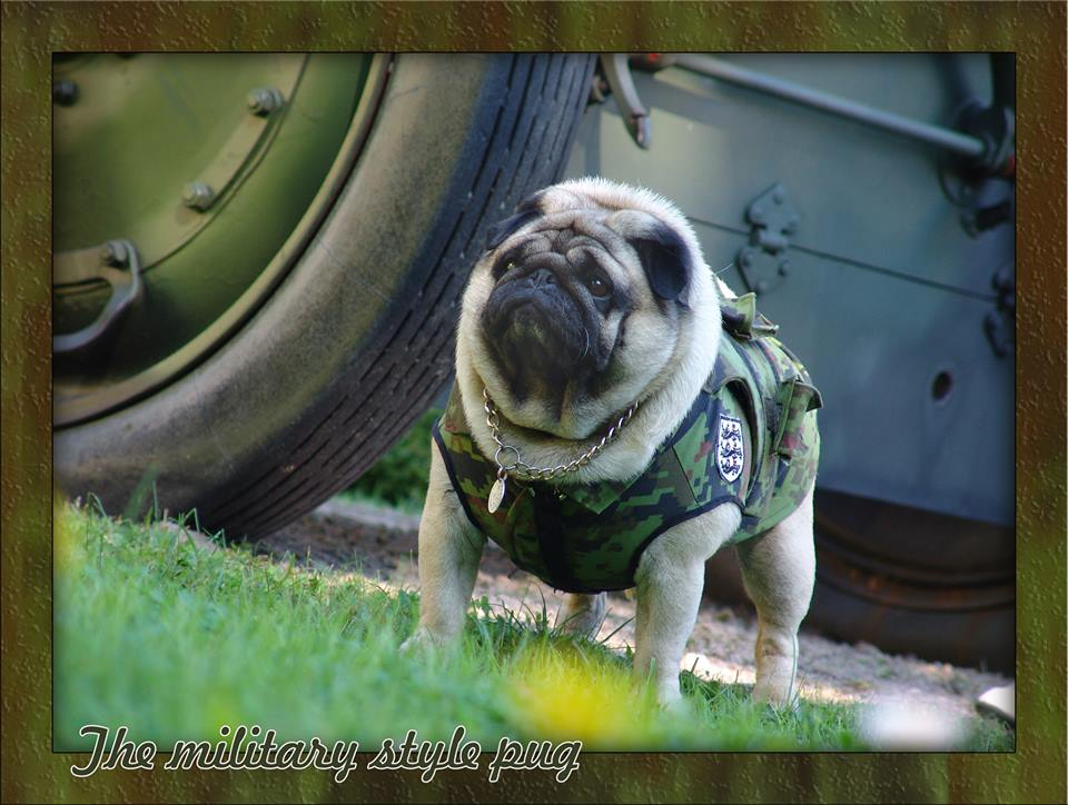 The Military Style Pug Gifts For Pug Lovers