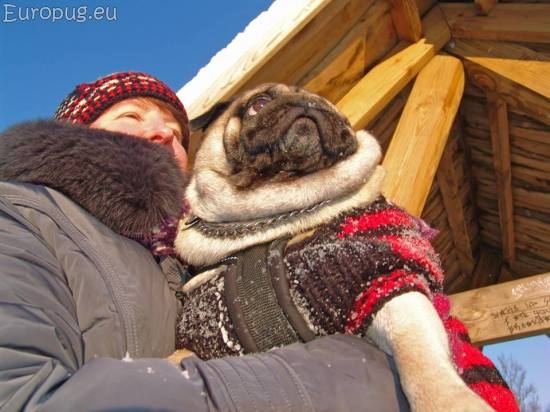 frost-pug2