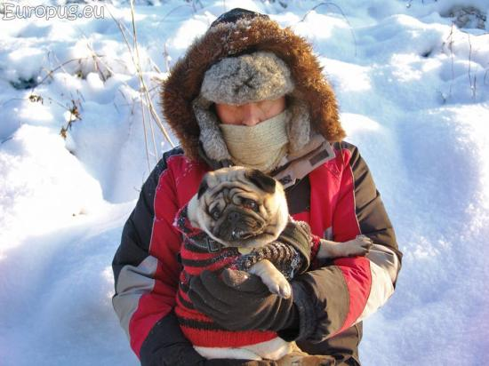frost-pug4