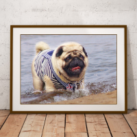 pug dog sailor photo