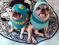 Barkclava Dog Hats