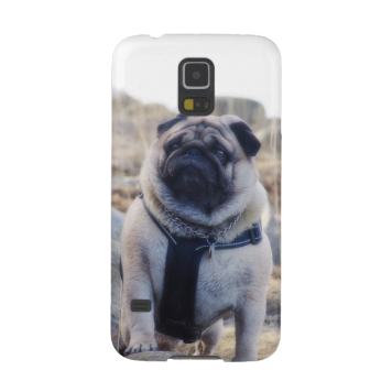 Euro Pug On The Stone Samsung Galaxy S5 case