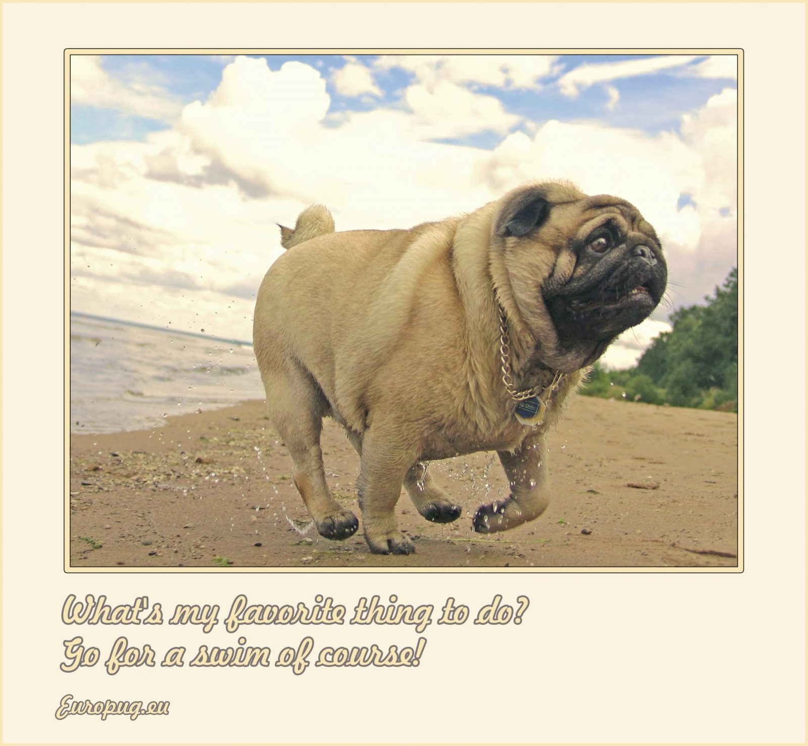 pug favorite thing