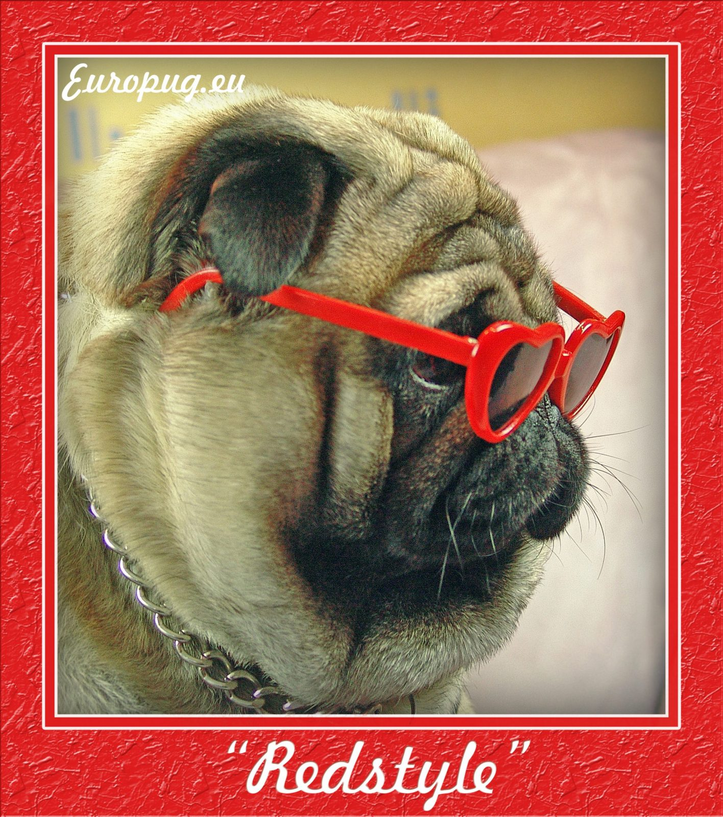 red style pug