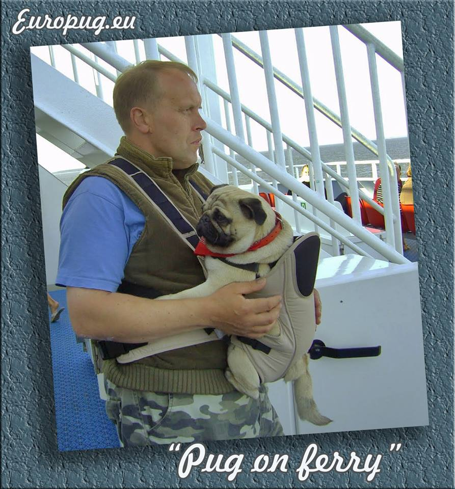 "Europug life ""pug on ferry"""