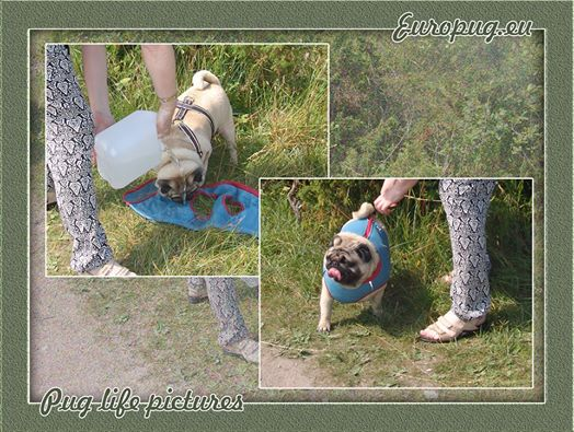 How to use cooling vest for dog