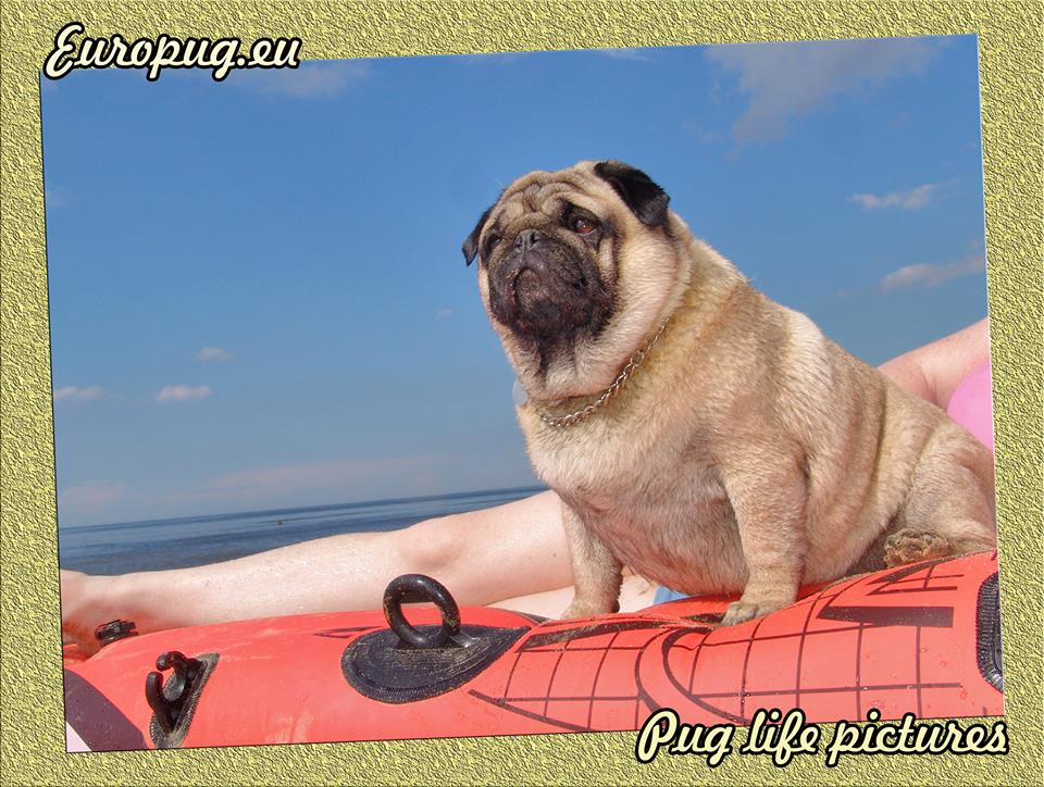 Europug and Inflatable Boat