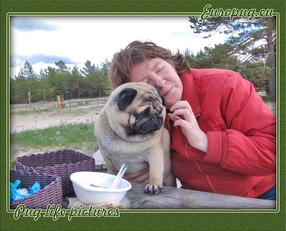 Pug life picture