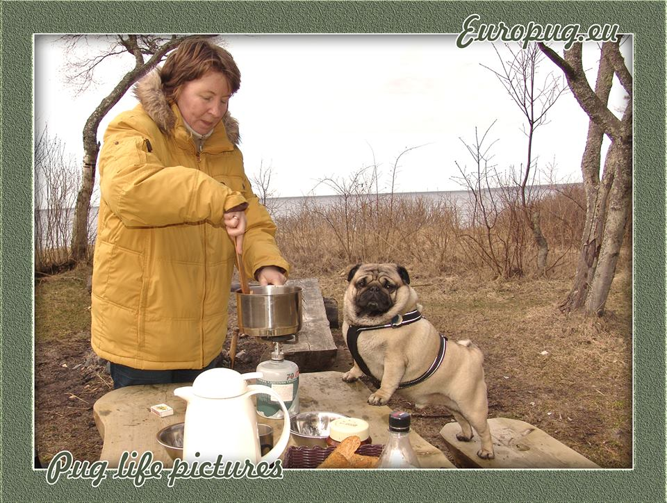 Pug with his mother cook