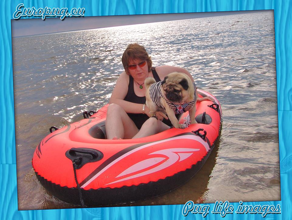 Pug be in a rubber boat