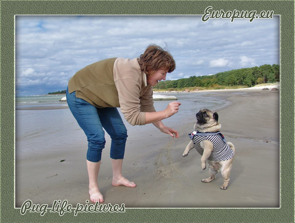 Pug walking with mom on the weekends