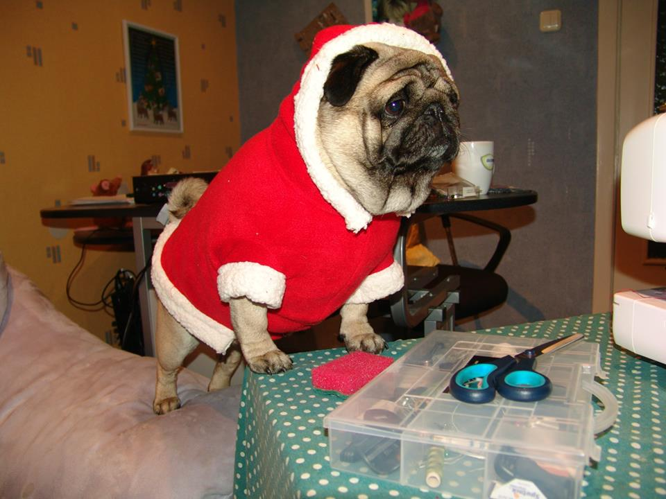 How to sew a Santa costume for a dog