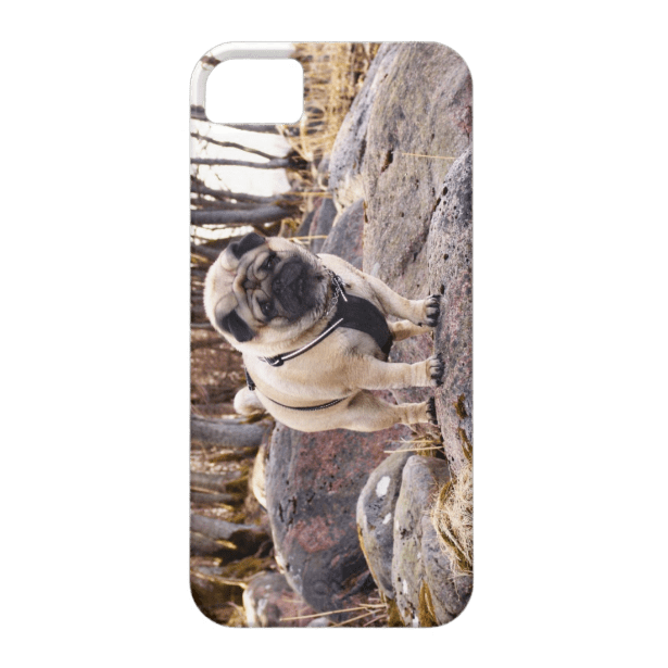 Euro Pug On The Stones iPhone 5/5S case