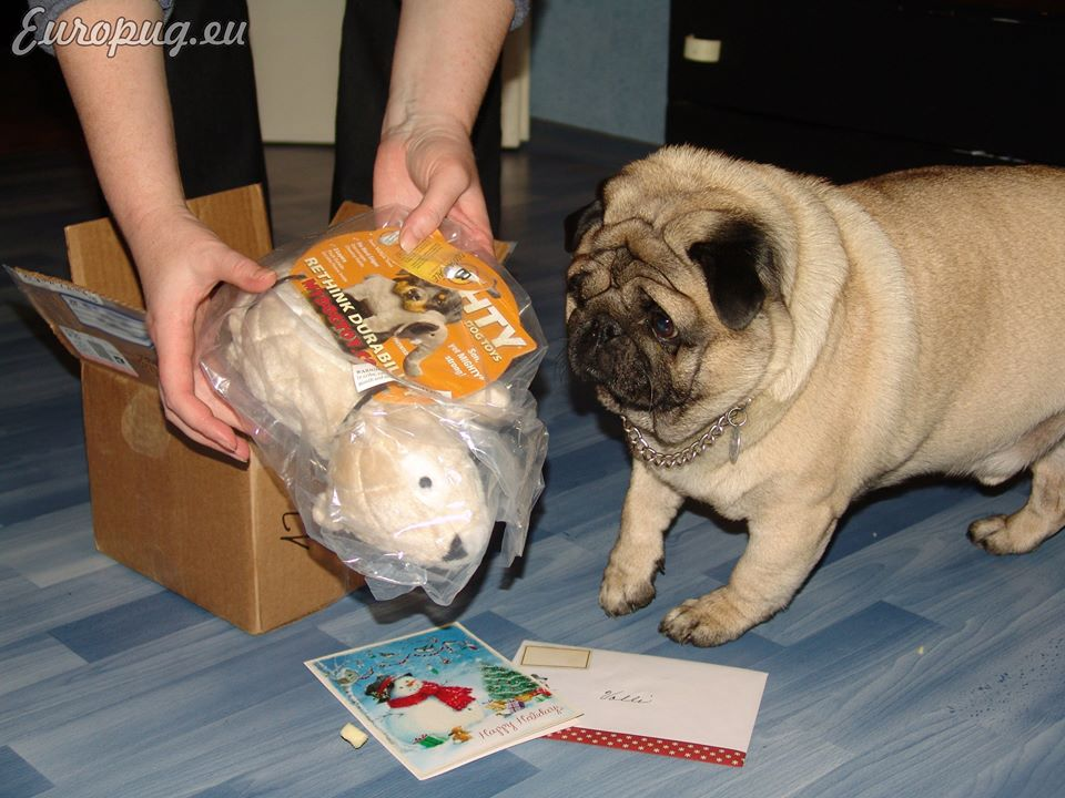Pug received a parcel from America