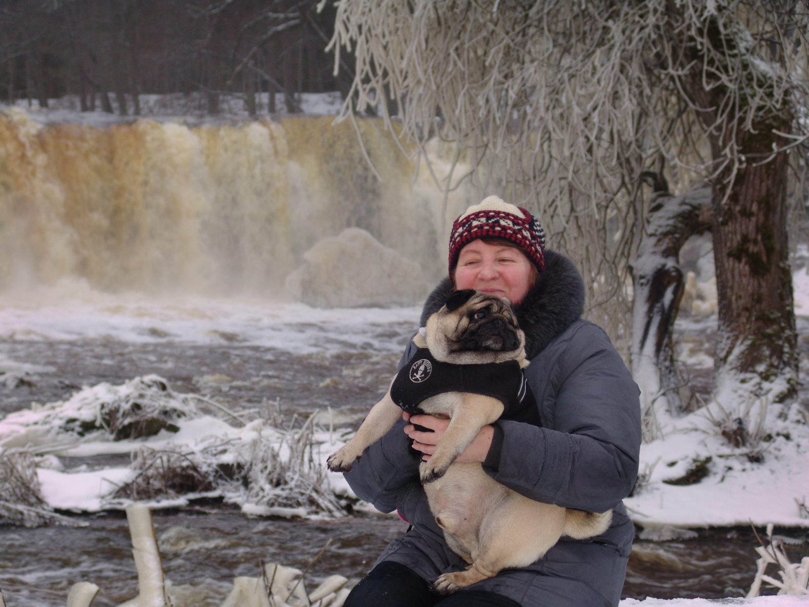 Pug on the edge of the waterfall