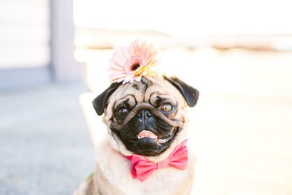 Dog Pink Bow Tie