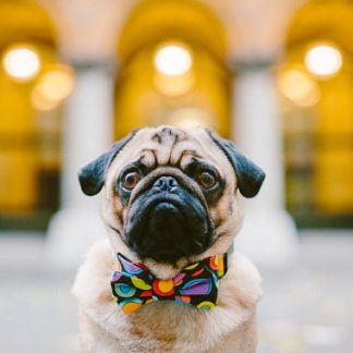 Dog Raindrops Bow Tie