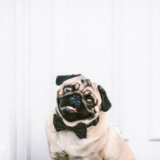 Dog Tiny Hearts Black Bow Tie