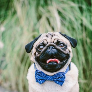 Tiny Hearts Blue Dog Bow Tie