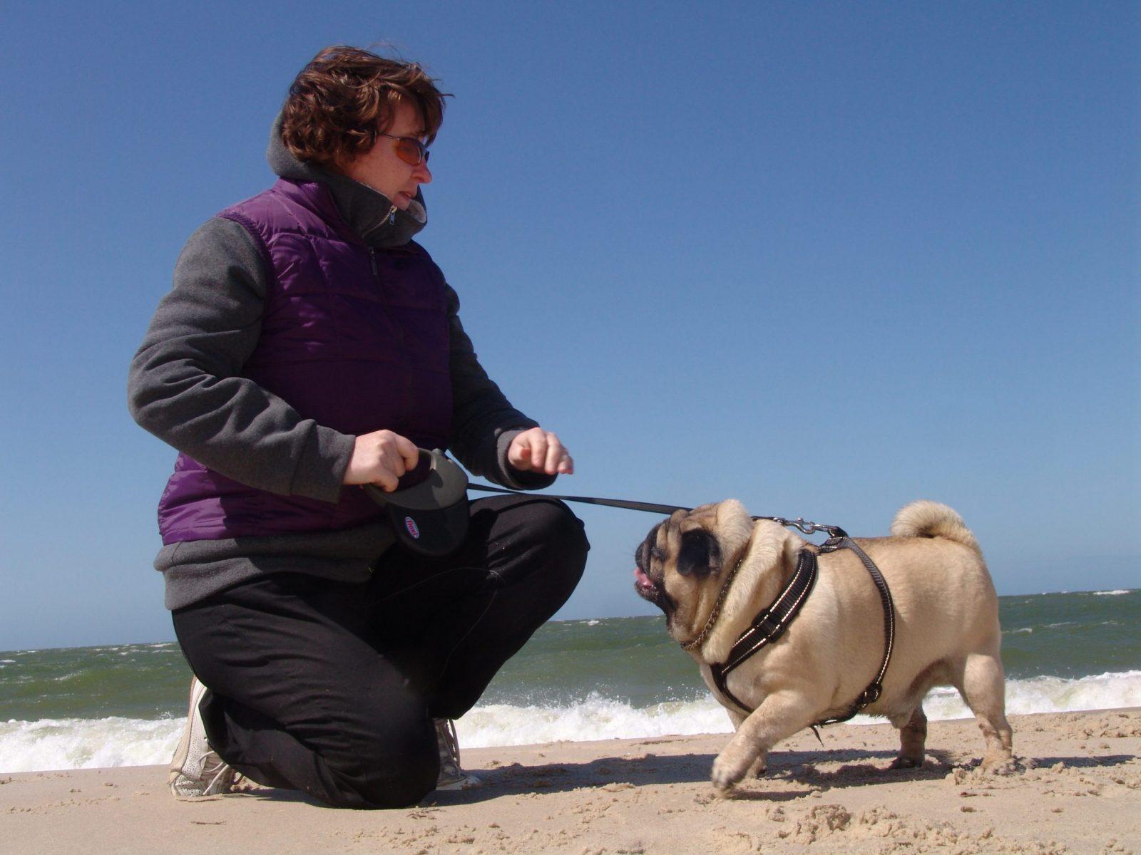Pug Valli with his mother playing on the beach