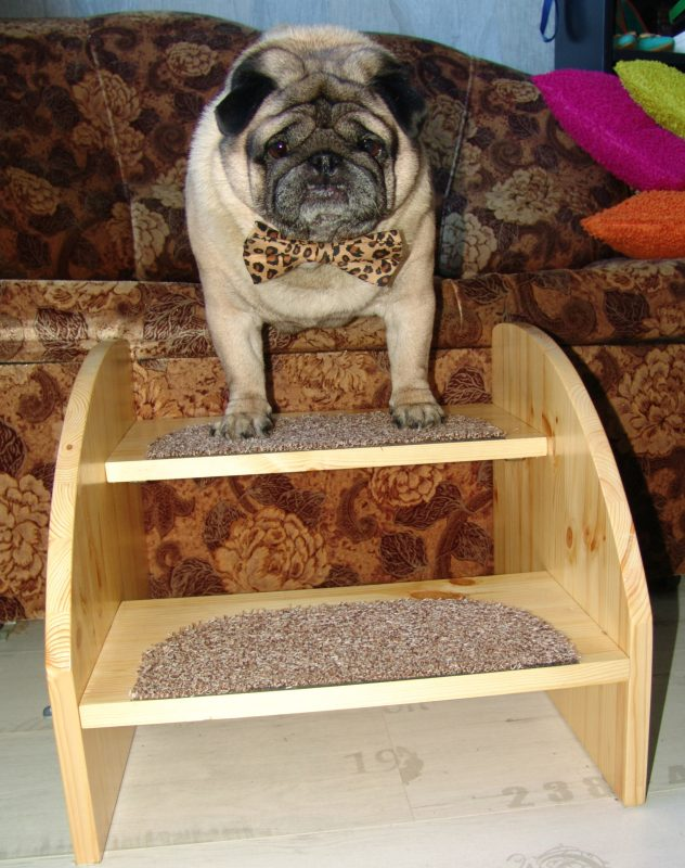 pet dog stairs