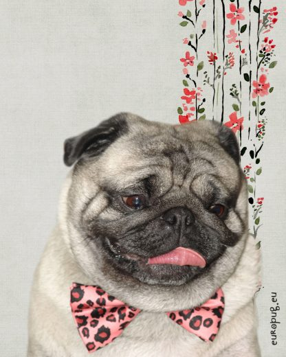 Funny Pug Dog Pink Bow Tie