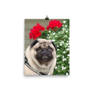Pug Dog Wall Art Red Flowers Poster