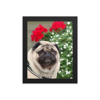 Pug Dog Wall Art Red Flowers Framed Poster